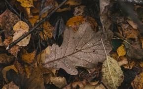 Картинка осень, листья, макро, дождь, опавшие листья
