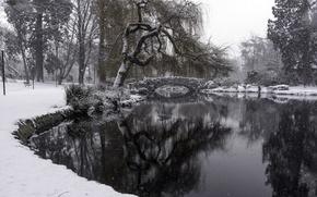Картинка зима, снег, beacon hill park, Goodacre Lake