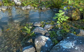 Картинка природа, камни, растительность, водоём, Fern Water PW
