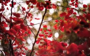 Картинка листья, ветки, ветер