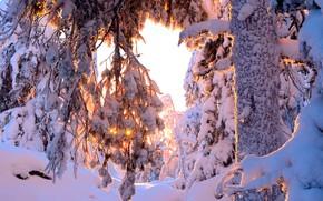 Картинка зима, лес, солнце, снег, деревья, сугробы