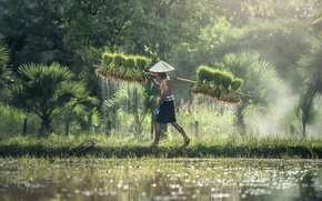 Картинка green, Азия, рис, field, hat, water, sun, asia, man, жатва, drops, rice, harvest, harvesting of …