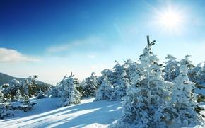 Картинка солнце, деревья, елки, winter, snow, зимний пейзаж