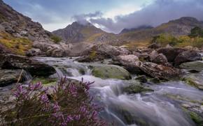 Картинка горы, река, камни, Англия, England, Уэльс, Wales, вереск, Ogwen Valley, Glyderau Mountains, Afon Ogwen River, …