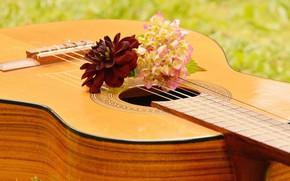 Обои Музыкальный Инструмент, Гитара, Музыка, цветы