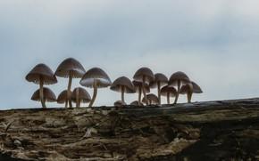 Картинка природа, дерево, грибы