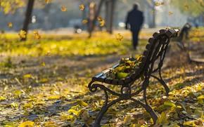 Обои осень, листья, скамья