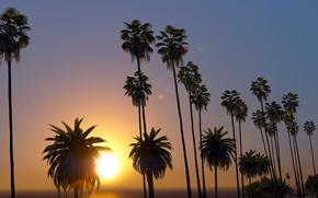 Картинка лето, солнце, закат, пальмы