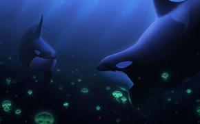 Картинка медузы, под водой, касатки, by Ciorano