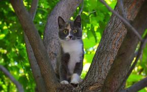 Обои Tree, Cat, Кошка, Дерево