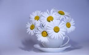 Обои букет, ромашки, цветы