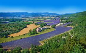 Картинка поля, домики, горы, Франция, панорама, деревья, лаванда, Valensole, солнце, небо, леса