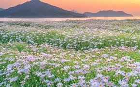Обои природа, горы, поле, цветы