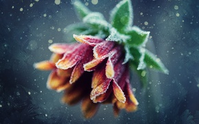 Картинка иней, цветок, узоры, мороз, боке