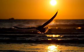 Картинка море, полет, закат, птица