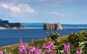 Картинка море, цветы, скала, Канада, Национальный парк, Иль-Бонавантюр-Э-дю-Роше-Персе