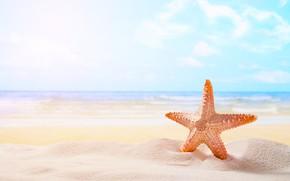 Картинка песок, море, пляж, звезда, summer, beach, sea, sand, starfish