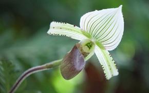Картинка макро, природа, лепестки, орхидея