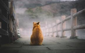 Обои кот, рыжий, сидит