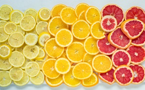 Обои juicy slices of goodness, oranges, citrus, grapefruit, lemons
