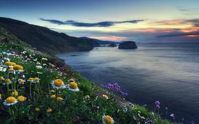 Картинка море, цветы, берег