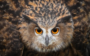 Картинка глаза, сова, птица, смотрит