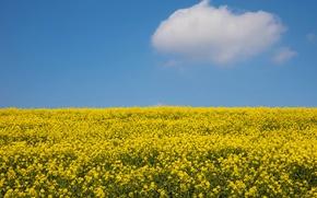 Картинка поле, небо, солнце, облака, желтый, рапс