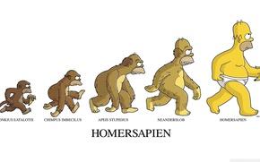 Картинка Гомер, банан, banana, Эволюция, Homer, the Simpsons, Симпсон, Simpson, Homersapien