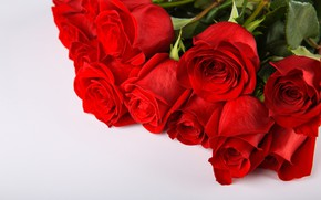 Картинка фон, букет, бутоны, Красные розы
