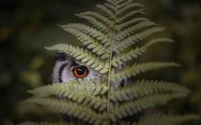 Картинка лист, глаз, сова, птица, папоротник