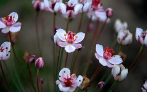 Картинка макро, цветы, природа, nature, flowers