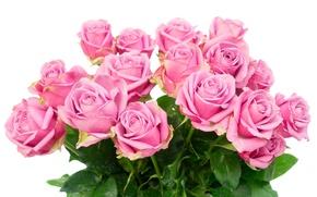 Обои розы, букет, roses, flowers, розовые розы, pink