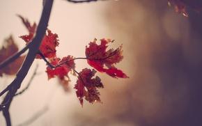 Картинка листья, природа, фон, ветка