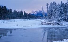 Картинка зима, снег, деревья, пейзаж, ручей