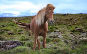 Картинка природа, лошадь, красотка