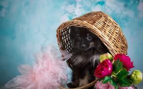 Картинка цветы, фон, животное, щенок