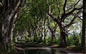 Обои природа, деревья, дорога
