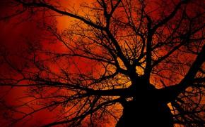 Картинка ветки, дерево, силуэт, зарево