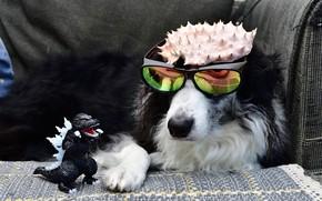 Картинка игрушка, собака, очки, годзилла