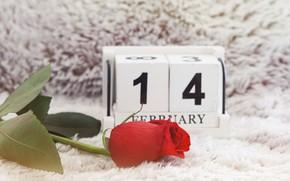 Картинка цветок, любовь, праздник, роза, love, rose, день влюбленных, flower, Valentine's day, holiday, день святого Валентина