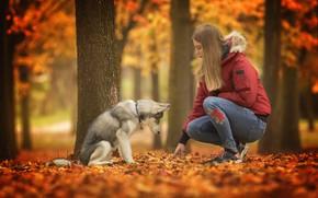 Обои собака, девушка, осень