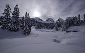 Картинка зима, снег, горы, Швейцария, ели, Альпы, сугробы, домик