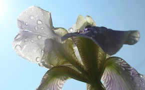 Обои лето, солнце, дождь, цветок макро