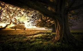 Картинка закат, природа, дерево