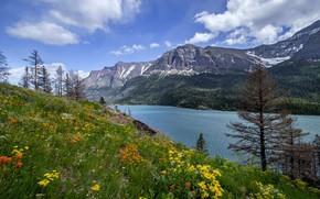 Обои луг, цветы, озеро, гора