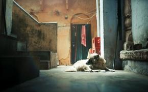 Картинка дом, комната, собака