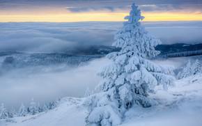 Картинка зима, облака, снег, туман, ель, утро, Польша, Poland, Исполиновы горы, Giant Mountains
