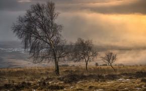 Обои поле, деревья, туман