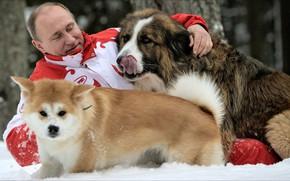 Обои game, dogs, frienship, Putin, winter