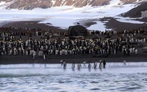 Картинка море, природа, пингвины, Antarctica